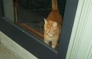 oc-the-cat-3