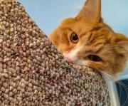 milo-the-cat-2