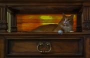 milo-the-cat-3
