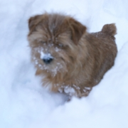 hank-in-snow-001301