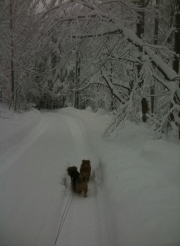 Hank and Otto In the Blizzard