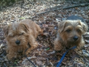 Hank and Otto Taking a Break In the Woods