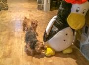 Hank and Otto Meet a Penguin