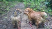 Hank and Otto Getting Muddy On the Trail
