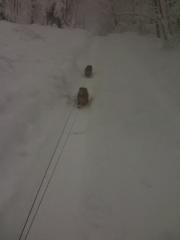 norfolk-terrier-hank-and-otto-walking-in-blizzard