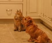 Hank & Shania Waiting for Food