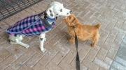 Hank Befriending a Dog Statue