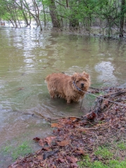 Hank Emerging From the Water
