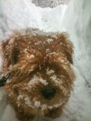 Hank Deep In Snow