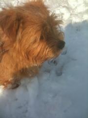 Hank Enjoying Winter Sun