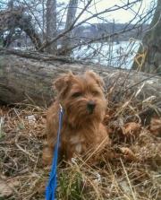 Hank Next To a Log