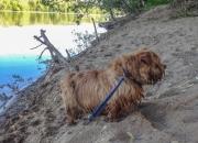 Hank On the Banks of Potomac River