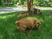 Hank, Otto, and Shania the Cat Enjoying the Shade