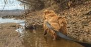 Hank Raising Paw in Potomac River