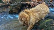 Hank Reaching Into Water