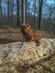 Hank Sitting On a Log at Riverbend Park