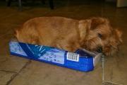 Hank Sleeping In a Box