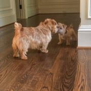 Hank With Puppy Ernie