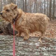 Hank Standing On a Log