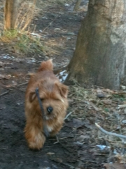 Hank Trotting Along In the Woods