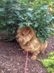Hank Under a Bush