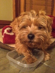 Hank Protecting a Plastic Dish