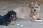 hank-with-puppy-otto-001680