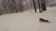 norfolk-terrier-ernie-romps-in-snow-1.jpg
