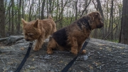 Otto and Ernie at Great Falls Park